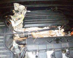 Car engine nest